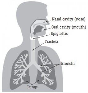 lung 1